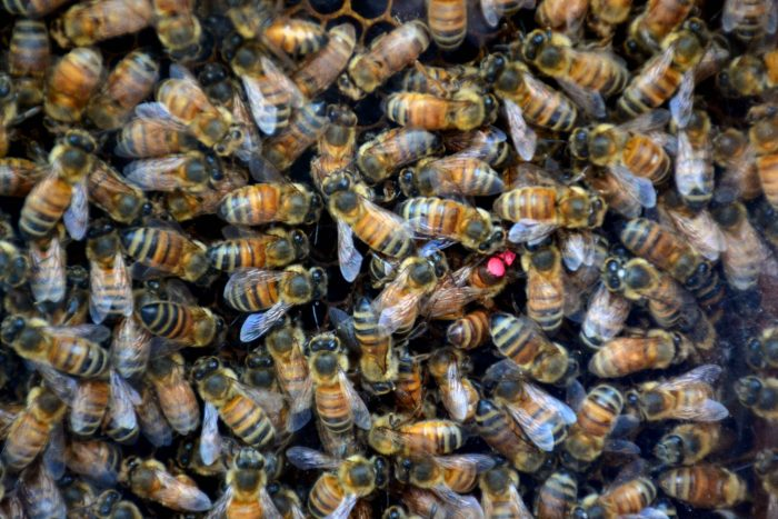 Semana de la miel (5)