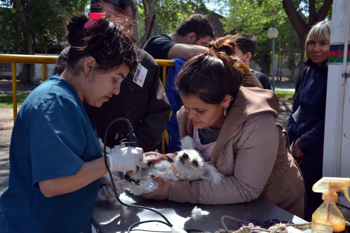 Programa Mascotas Argentinas - Quir_fano m_vil (4)