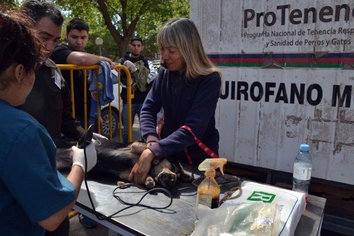 Programa Mascotas Argentinas - Quir_fano m_vil (9)