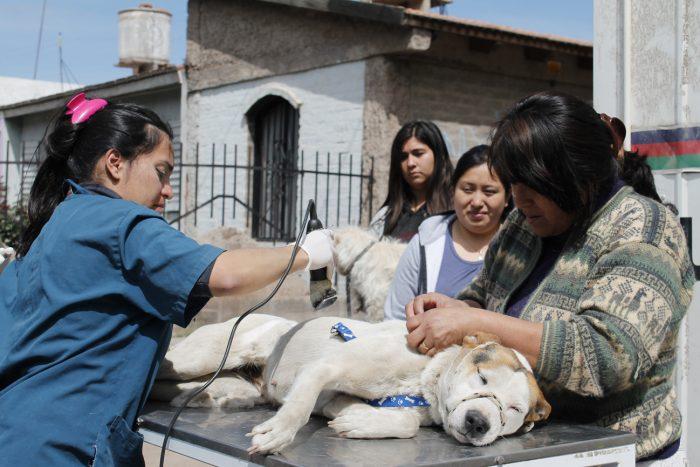 programa mascotas argentinas (2)
