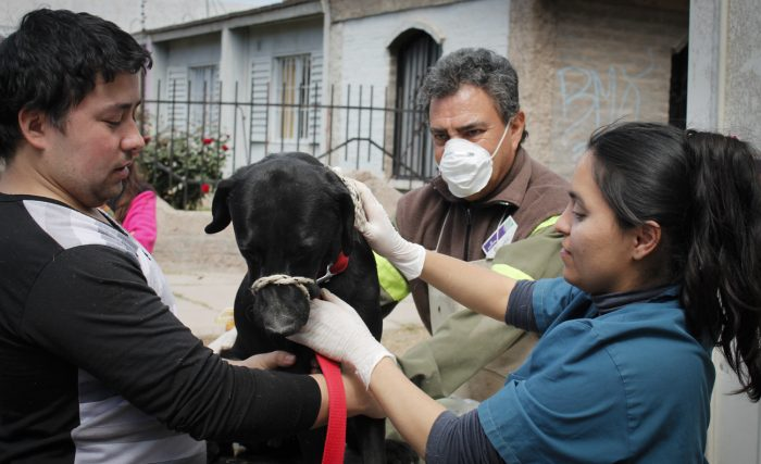 programa mascotas argentinas (5)